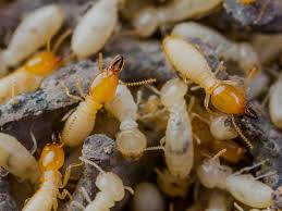 Facts About Pest and Termite