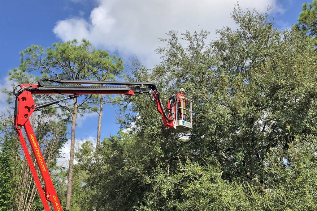 special tree services